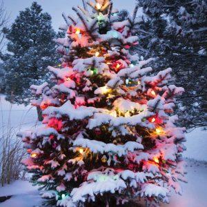 Verlichte Kerstboom in sneeuwlandschap