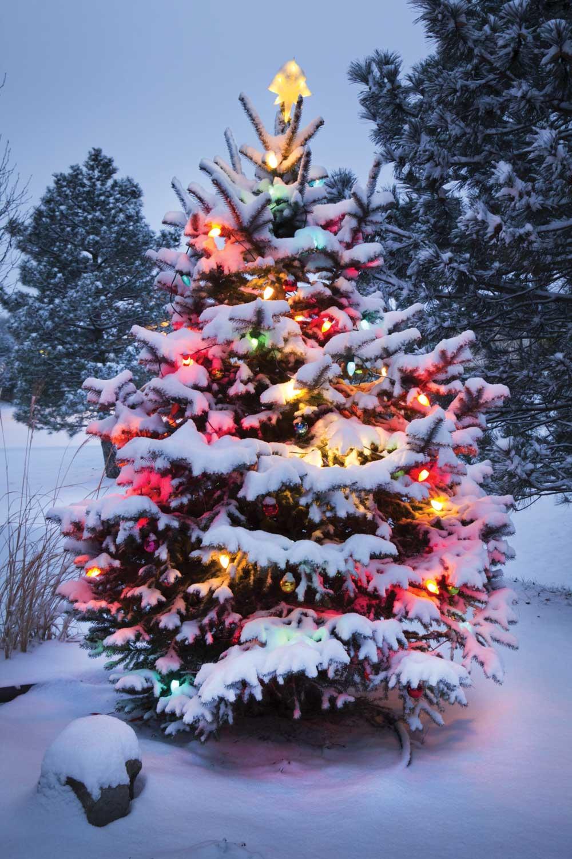Kerstboom 1 Kerst Tuin Doek Nl Kerst Tuin Doek Nl
